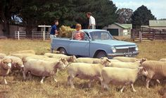 Iconic Aussie cars - Holden EH ute (my dad drove one for years, same blue colour) Holden Australia, Car Facts, Australian Cars, Holden Commodore, Car Museum, Old Tractors, Car Magazine, Cool Gear, Automobile Industry