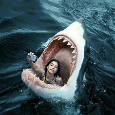 Picture Day lolosbri ello is part of Shark The Picture of the Day - Cool Pictures, Funny Pictures, Photocollage, Great White Shark, Picture Day, Mystic Messenger, Funny Wallpapers, Underwater Photography, Surreal Art