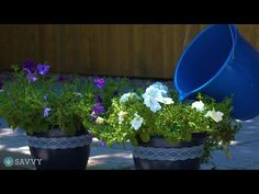 Try This Homemade Plant Food and Watch Your Plants Grow Big and Beautiful Homemade Plant Fertilizer, Homemade Plant Food, Fertilizer For Plants, Container Herb Garden, Recycling Containers, Homestead Gardens, Growing Gardens, Raised Garden Beds, Garden Projects