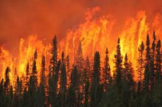 Image result for pictures of wild fires