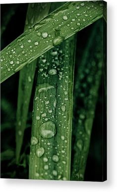 Grass Acrylic Print featuring the photograph Green Grass With Waterdrops by Oksana Ariskina on @pixels and @fineartamerica  Buy print and other product with my fine art photography online: www.oksana-ariskina.pixels.com   #OksanaAriskina  #FineArtPhotography #HomeDecor #FineArtPrint #PrintsForSale #Grass #Plant #Green #Spring #Summer #Drop #Tears #Teardrops #macro #Closeup