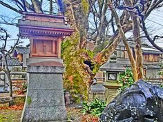 HDR Japanese Garden2 by MeAmore5, via Flickr