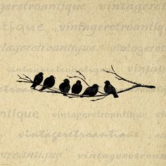 Vintage digital birds on tree branch graphic download for transfers, printing, tote bags, papercrafts, t-shirts, and much more. This antique