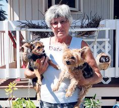3 Whippets running loose attack Mary Hayes as she walks her 2 small terriers. She kicks them away, and they attack and kill a nearby cat. The dogs' owner,  Brad Shikahiro, uses them to hunt and says they escaped a pen. He blames the cat, saying it scratched a dog's nose and turned a playful frolic serious. (Oct 2014, HI) http://thegardenisland.com/news/local/cat-death-sparks-tension/article_8a9e2530-6252-11e4-a47d-479896966919.html#user-comment-area