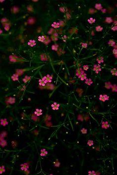 babys-breath Baby's breath by poesie Frühling Wallpaper, Floral Wallpaper Iphone, Spring Wallpaper, Flower Background Wallpaper, Cute Wallpaper Backgrounds, Flower Backgrounds, Colorful Wallpaper, Pink Glitter Wallpaper, Cellphone Wallpaper