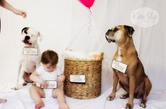 Don't forget your pets become older siblings when you bring home the new baby too! Cute photo idea for including the whole family in a birth announcement photograph.