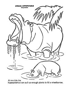 yawning hippo wild animal coloring page hippopotamus coloring page