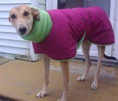 ontario dog coat
