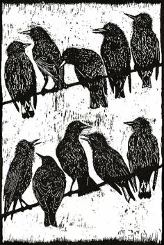 Chattering Starlings. Woodcut