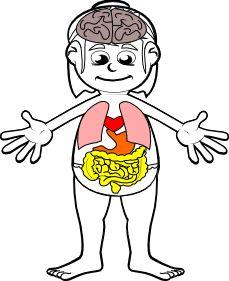Dos fichas (niño y niña) y otra más con cerebro, corazón, pulmones, estómago e intestinos, para colorear, recortar, pegar los órganos en su sitio y poner el nombre a cada uno de ellos. Con esta ficha para el Primer y Segundo Ciclo de Primaria, se pretende trabajar el nombre de …