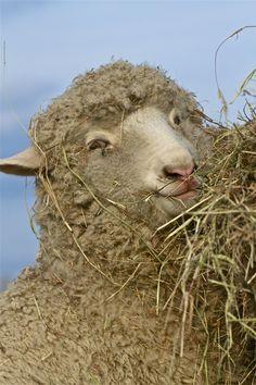Sheep against a BlueSky by Joel Eagle