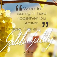 Wine is sunlight held together by water - Galileo Galilei (Wine Quote)