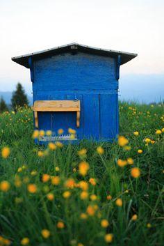 abeilles © Éric Tourneret