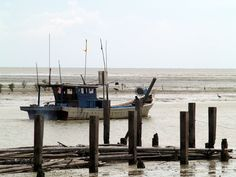 Parit Jawa : Birding Destination and Seafood Haven