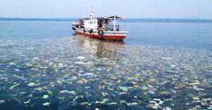PROJETOBIOMAR: Fotógrafo registra verdadeiras 'ondas de lixo' nas águas poluídas da Indonésia