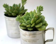 succulent reclaimed container gardens