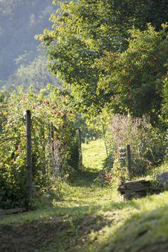 La via degli orti