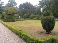 Buxus uil