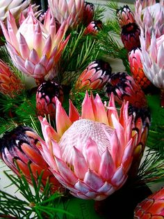 King and queen protea Flor Protea, Protea Art, Protea Bouquet, Protea Flower, Cactus Flower, Tropical Flowers, Hawaiian Flowers, Exotic Flowers, Beautiful Flowers