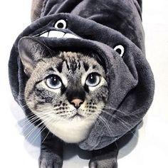 ❄️❄️  .  .  .  .  #catstagram #cats #instacat #catsofinstagram  #catslover