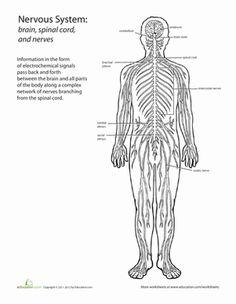 blank diagram skeleton human body label the blank worksheet to match the diagram diagrams. Black Bedroom Furniture Sets. Home Design Ideas