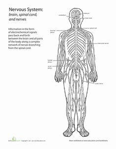 Middle School Life Science Worksheets: Inside-Out Anatomy: The Nervous System