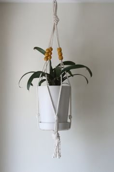 Modern Plant Hangers in Petworth, Washington ~ Apartment Therapy Classifieds