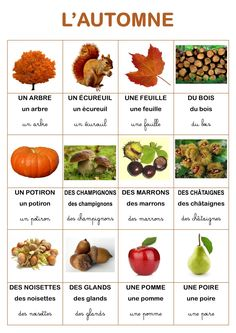 Resultado of vocabulary imagen the autumn . French Teaching Resources, Teaching French, How To Speak French, Learn French, French For Beginners, French Education, French Expressions, Montessori Education, French Classroom
