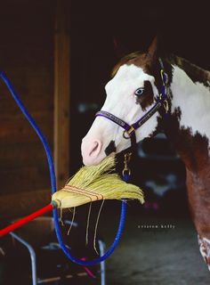 Better idea would be to put the broom handle in the mouth and teach him how to sweep! Funny Horse Pictures, Broom Handle, Majestic Horse, All About Horses, Zebras, Beautiful Creatures, Fur Babies, Pony, Animals