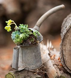 Oil-Free Oil Can-Whether the chickens are gone or you have a special place in your heart for all things galvanized, repurposing an old feeder could be the best way to add a conversation piece to your garden.