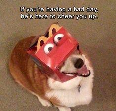 Morning Funny Memes 34 Pics
