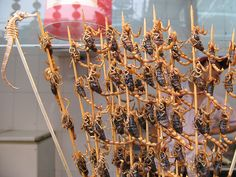 Scorpions & Sea Creatures on Sticks in China