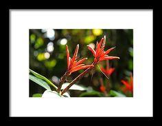 orange, flower, macro, nature, blossom, michiale schneider photography