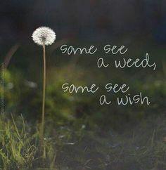 Wish away!