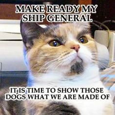 Cute Cat and Funny Cat: Make ready my ship general. It is time to show tho...
