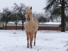 Spirit Quarter Bar Flower Command Spirit, Horses, Bar, Flowers, Animals, Animais, Animales, Animaux, Horse