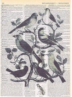 BirdAntique French Book