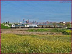 Tren bobinero primaveral