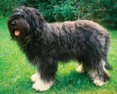 QUIZ: Dog Breeds