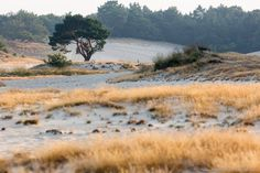 National Park de Loonse en Drunense Duinen (Drunen) - 2020 All You Need to Know BEFORE You Go (with Photos) - Tripadvisor Hiking Routes, Eurotrip, Need To Know, Trip Advisor, Traveling By Yourself, Camping, Mountains, Landscape, Photos