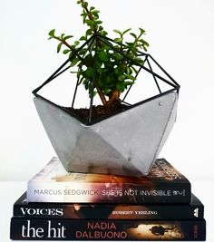 Succulents and books!!  Perfect combination