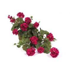 Google Image Result for http://www.lnt.com/photos/product/standard/6906370S134107/artificial-plants/pack-of-2-fuchsia-hanging-geranium-artificial-floral-bushes-30.jpg
