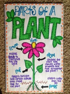 31 ideas for plants kindergarten science anchor charts Science Anchor Charts, Kindergarten Anchor Charts, Kindergarten Science, Elementary Science, Science Classroom, Teaching Science, Science Activities, Science Ideas, Classroom Decor