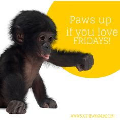 Paws up if you love Fridays! #TGIF