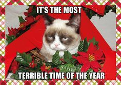 Grumpy Cat's Holiday Card