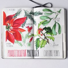 Botanical sketches for masterclasses taking place at the Moscow Botanical Gardens
