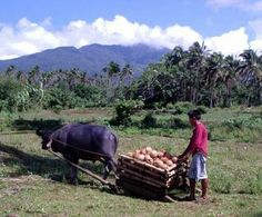 Images of the Philippino Countryside | Rural Philippines