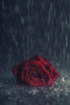 Red Flower Wallpaper, Dark Wallpaper, Galaxy Wallpaper, Wallpaper Backgrounds, Iphone Wallpapers, Beautiful Flowers Wallpapers, Beautiful Nature Wallpaper, Pretty Wallpapers, Beautiful Roses