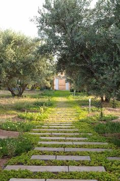 Stone path among the olive trees