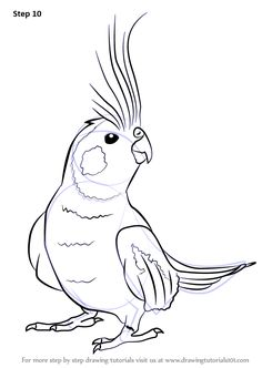 Cockatiel is a family member of Cockatoo and are mostly found in Austrailia. The… – Bird Supplies Copic Drawings, Bird Drawings, Pencil Art Drawings, Easy Drawings, Animal Drawings, Drawing Sketches, Drawing Art, Figure Drawing, Bird Template